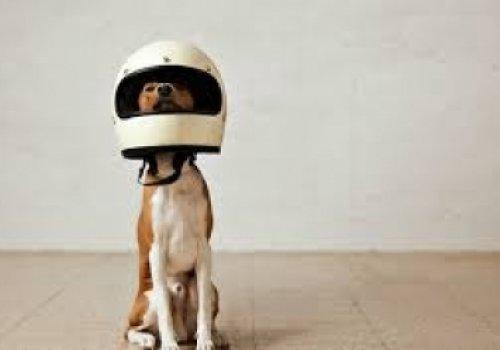 Motociclista ganha ação de indenização por acidente com cachorro